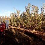 60.000 euros para apoyar la participación de agricultores y ganaderos en los regímenes de calidad