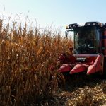 El maíz crece en Aragón pero continúa al límite de la rentabilidad