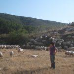 Conchita Royo: «Con tanta incertidumbre, resulta imprescindible el apoyo de la administración para que no se pierda la ganadería extensiva»