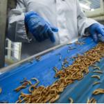 Herramientas tecnológicas para la nueva ganadería de insectos