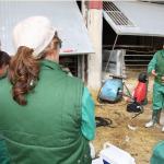 ¿Producir corderos sin antibióticos?