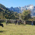 Proyecto EBARANA para la gestión inteligente de la ganadería extensiva