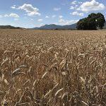 La agricultura ecológica vuelve a crecer en Aragón y busca reconocimiento