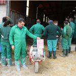 Corderos libres de antibióticos