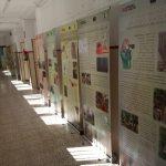Alumnos del ies de Calamocha visitan la exposición sobre el chopo cabecero