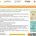 Insectos, ¿la proteína del futuro? Un grupo de cooperación señala el camino