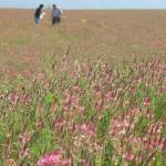 180.000 euros destinados a promocionar el cultivo de «esparceta» para mantener la biodiversidad
